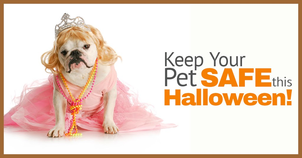 Halloween Safety: Essential Tips for Your Dog