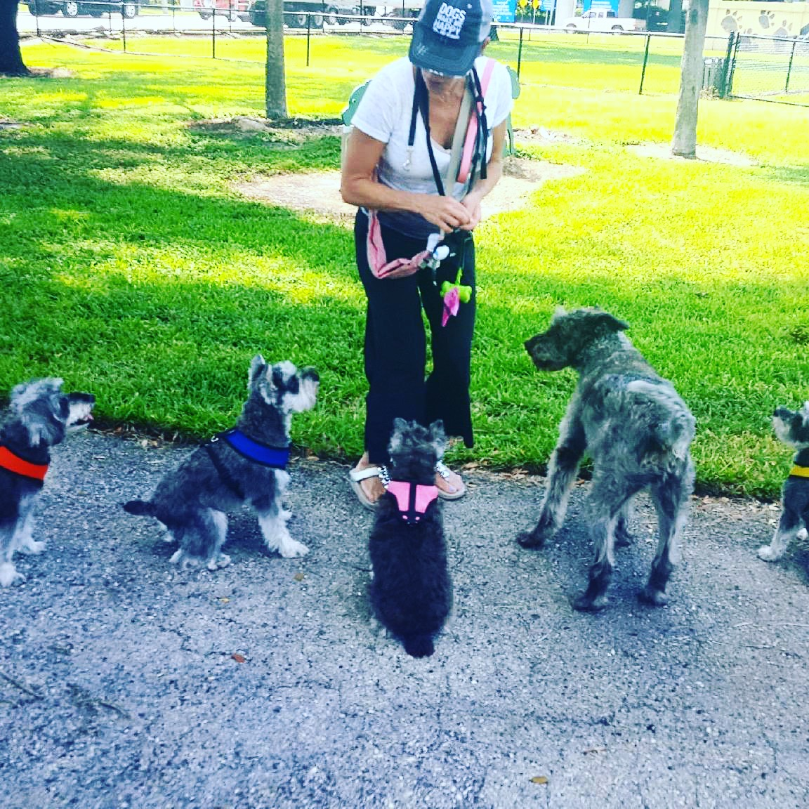 Dog Park Safety Tips
