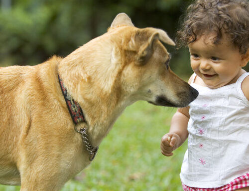 How Can I Introduce My Dog to Children?