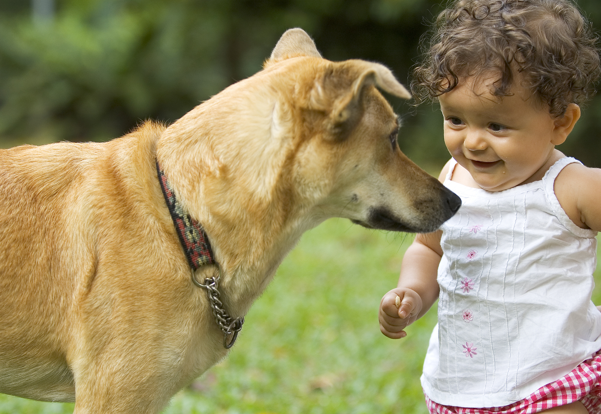 bigstock Infant And Dog 27731 2