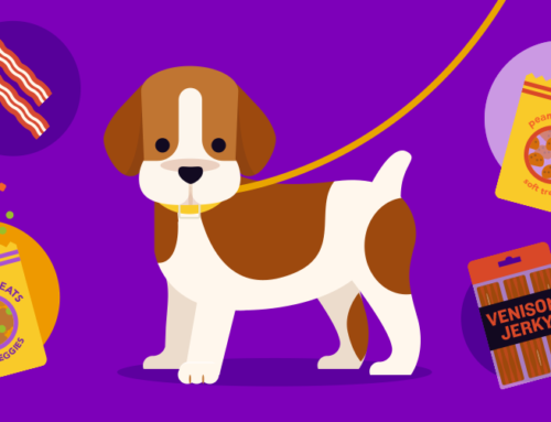 Your New Puppy Training Guide: When to Tackle Each Skill